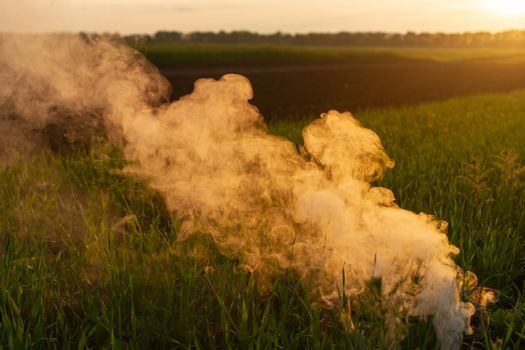 Big strikeball smoke grenade in young wheat. The white smoke in grass against evening sun. Sun position on horizon.