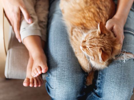 Top view on cute ginger cat lying on knees. Woman in jeans sits on chair with toddler and with fluffy pet on knees. Cozy home for domestic animal.