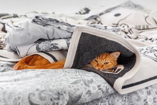 Cute ginger cat hides in bed. Fluffy pet sleeps under blanket. Cozy morning bedtime in cozy home.