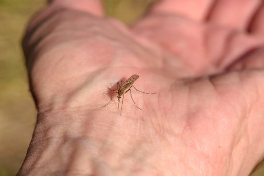 A mosquito sits on a person`s hand and is about to bite