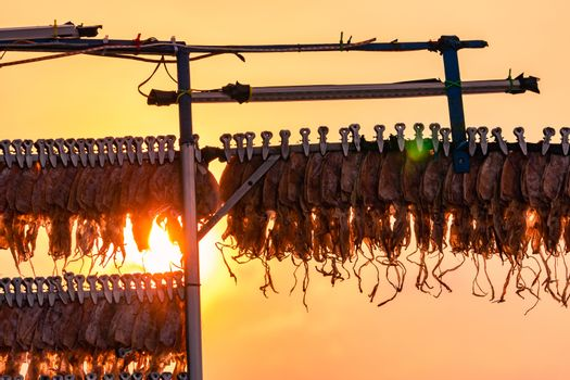 Dried squid hanging with clip in a line against sunset sky. Stre