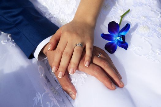 Hands of the bride and groom on the background of a wedding dres
