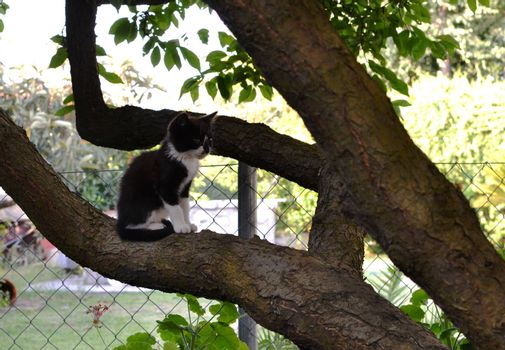 Beautiful little black cat climbed on a branch of a tree