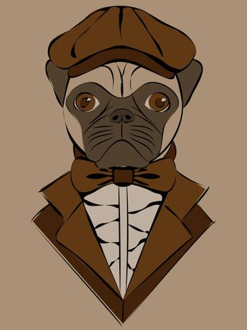 cute illustrasion with pug in old-fashioned brown cap and jacket on beige backgrond