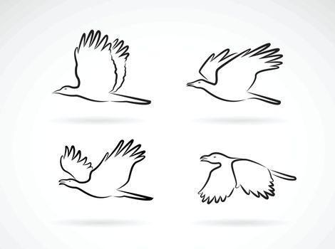 Vector group of crow flying on white background. Birds. Animals. Easy editable layered vectors illustration.