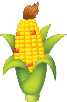 Corn Vector Isolated