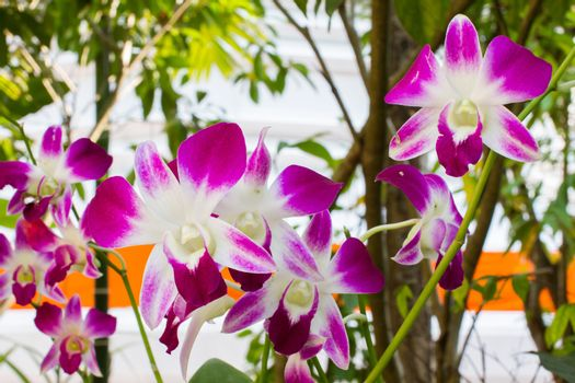 Beautiful purple orchid in the garden, background