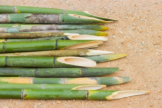sharpened bamboo sticks on the ground used for stabbing dracular