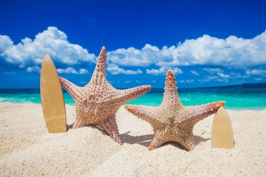 Two starfish surfers on sand of tropical beach at Philippines