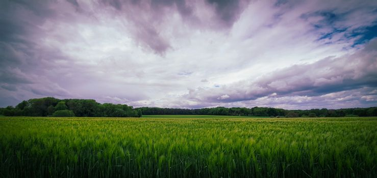 Beautiful landscape with green barley field with cloudy sky in the background. Green fields in the countryside near Bonn, Germany.