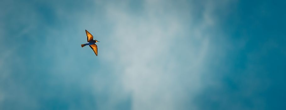 Panoramic photo of a bee-eater flying in the sky, beautiful colorful bird over blue sky background, migration of exotic birds