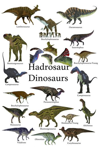 This is a collection of ornithopod herbivorous Hadrosaur dinosaurs who have a duck-bill with some of them with a cranial crest.