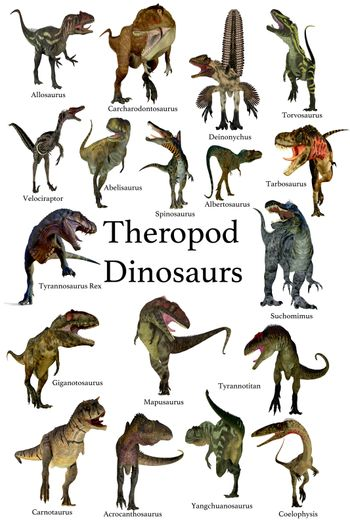 A collection set of Theropod carnivorous dinosaurs from the Cretaceous, Jurassic and Triassic Periods.