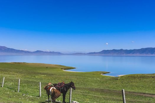 Two horses tied to a fence in front of a beautiful lake in the grasslands of Xinjiang Province