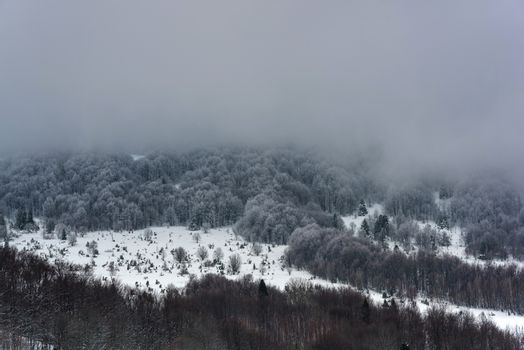 Moody and Dramatic Image of Snow Covered Woodlands at Hill in Bieszczady, Poland.