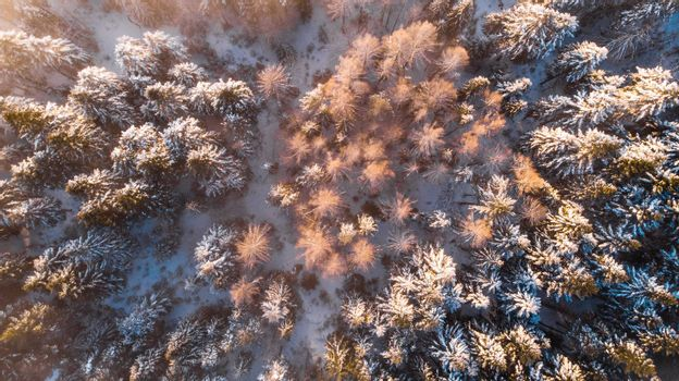 Beautiful Sunlight in Winter Wonderland. Trees Covered in Snow. Top Down View.