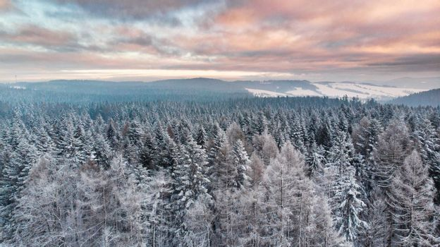 Sunrise Over Snowy Pine Trees. Beautiful Sky and Clouds. Aerial Drone View. Winter Season.