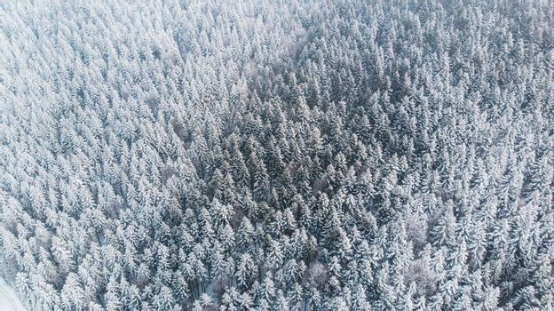 Abstract Winter Wonderland. Pine Trees Snow Covered. Aerial Drone view.