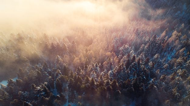Breathtaking Sunrise over Pine Trees Forest in Winter. Sunlight Beams over Spruce Trees. Aerial view.