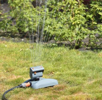 Bushes of parsley, onion and lawn grass water the lawn sprinkler