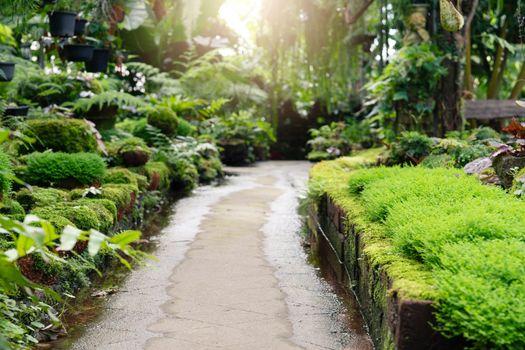 walkway path in garden freshness in garden