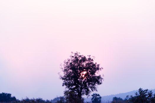 beautiful twilight sunset on the tree, lanscape filter apply