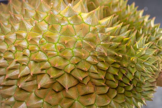 Close up thorn of Durian the famous fruit from Thailand, it also known as The King of Fruits.