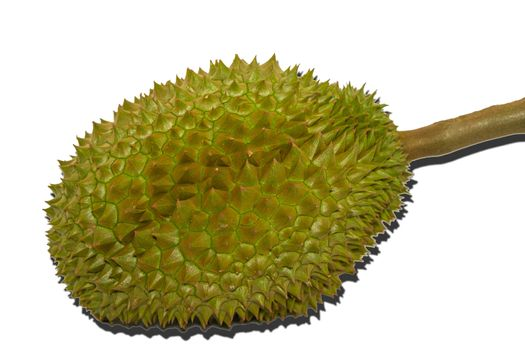 The Durian the famous fruit from Thailand, it also known as The King of Fruits on white background.