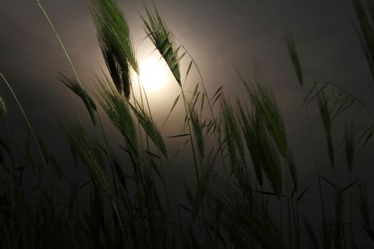 grass sunset in meadow
