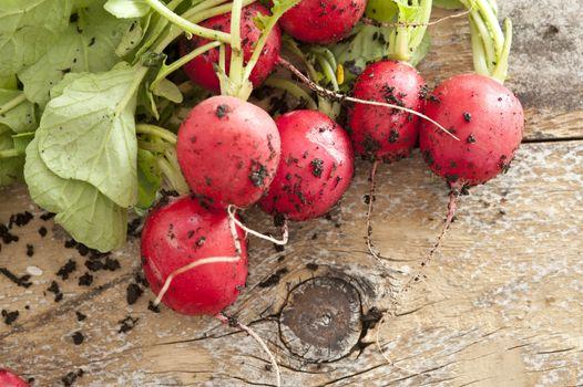 Freshly harvested radish against wooden background
