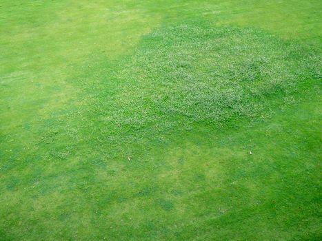 Green grass texture background, Top view of grass garden Ideal c