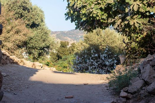 a wide view from a mountain pathway inside forest. photo has taken at izmir/turkey.