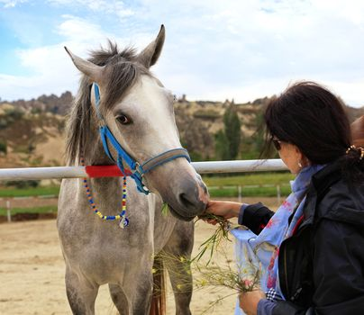 A young gray horse with a bright turquoise bridle and round colorful beads around the neck stands in the horse pen and eats green grass from the hands of the lady