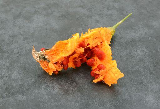 Sticky red seeds revealed inside an overripe orange bitter gourd, on a slate gray background
