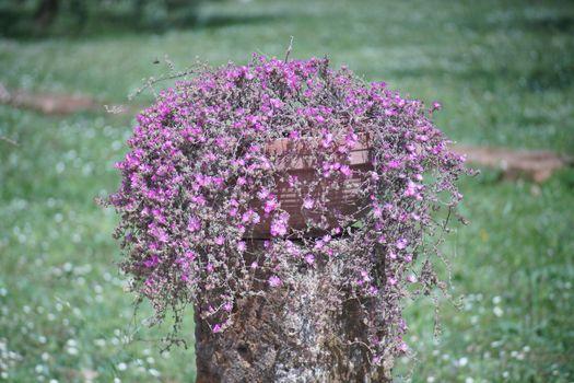 vaso con fiori rosa