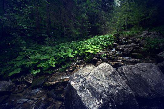 Dark forest in mountains. Nature landscape.