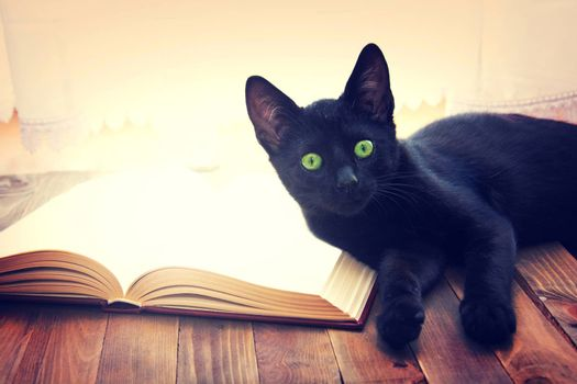 Open book and black cat on wooden table. Knowledge and education conceptual image.
