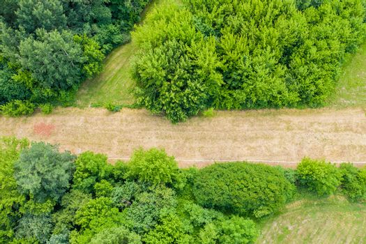 Aerial top view of a country road through a fir forest and a green field in summer