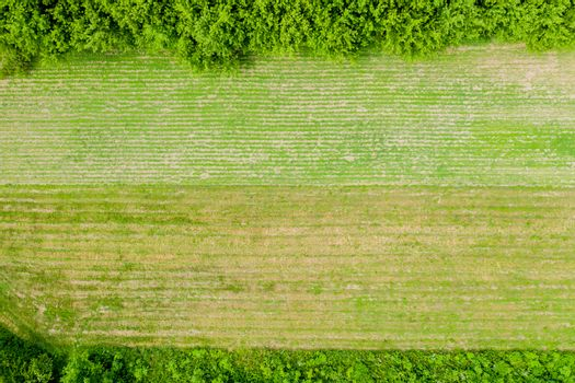Forest and tree landscape texture background, Aerial top view forest, Texture of forest view from above