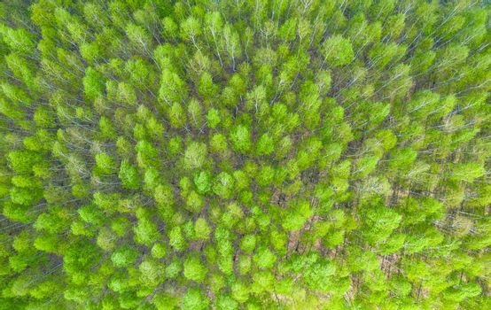 Aerial view road going through forest, Road through the green forest, Texture of forest view from above, Ecosystem and healthy environment concepts and background.