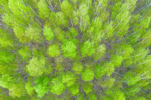 Aerial top view forest tree, Rainforest ecosystem and healthy environment concept and background, Texture of green tree forest view from above.