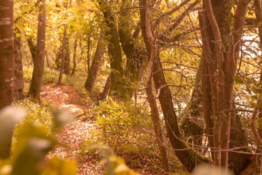 Tranquil autumn scene in forest