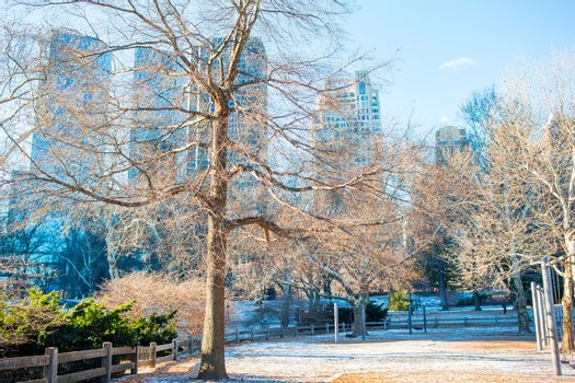 Beautiful Central Park in New York City