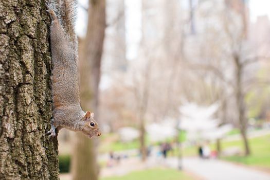 Squirrel on the tree in Central park, New York