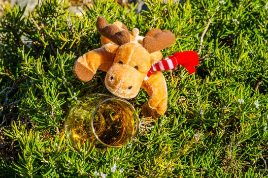 Plush Rudolph reindeer with single malt whisky  in glass on the