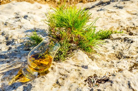 single malt whisky  in glass on plants on the rock, drink on a