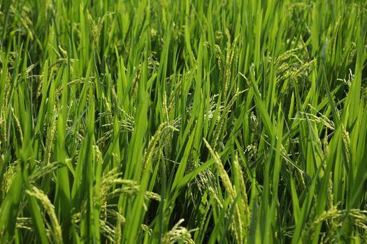 Green Fields Kerala India