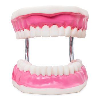 Oversize human teeth prosthesis isolated on white.