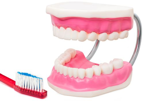 Oversize teeth prosthesis with toothbrush.