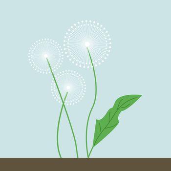 Dandelions, illustration, vector on white background.